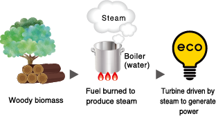 Biomass Power Generation | PROSPEC AZ Inc